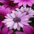 Аватар пользователя oksana-oksanochka